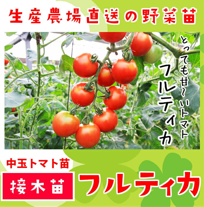 【てしまの苗】トマト苗 フルティカ 断根接木苗 9cmポット 野菜苗
