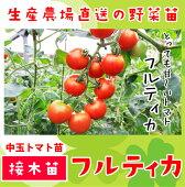 中玉トマト・フルティカ