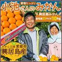 興居島 「小池さんのみかん」 ご家庭用 2Sサイズ10kg(送料無料) 10329:食品(直)