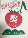 高知県 奏フルーツトマト 約2kg|11358:野菜