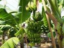 国産バナナ おかやまおひさまファーム 岡山県産 バナナ Mサイズ (120g〜140g) 5本【産地直送】【国産】