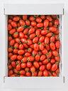 熊本県産 アイコトマト 3kg ((有)肥後自然の恵)(stk-211-14699)| とまと トマト ミニトマト プチトマト アイコトマ…