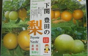 豊田梨(20世紀・豊水混合)赤秀3L・2L5kg山口県産 85259:フルーツ・果物