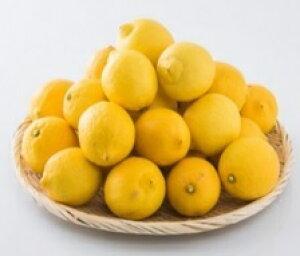 送料無料 レモン 〇 S 5kg 愛媛県産 【期日指定できません】