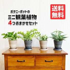 観葉植物 セット 本物 ミニ 4鉢セット お試し 特価 お買い得 ボタニ—ポット植えの観葉植物 小型 小鉢 ミニサイズ インテリア