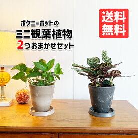 観葉植物 セット 本物 ミニ 2鉢セット お試し 特価 お買い得 ボタニ—ポット植えの観葉植物 小型 小鉢 ミニサイズ インテリア