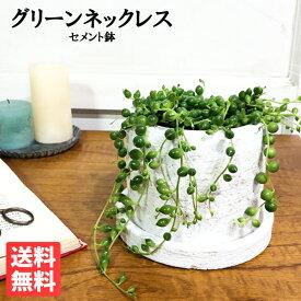 グリーンネックレス 白色鉢植え セメントホワイト 観葉植物 ミニ 卓上 セメントポット 緑の鈴 送料無料