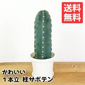 サボテン 柱サボテン 1本立 寒さに強い 観葉植物 おしゃれ ミニ 小型 送料無料 インテリア