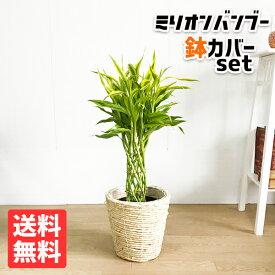 ミリオンバンブー 幸運の竹 6号 ナチュラル鉢カバー付 送料無料 ドラセナ サンデリアーナ 観葉植物 おしゃれ 中型 小型 ラッキーバンブー インテリア