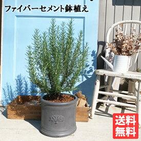 ローズマリー 立性 ラウンドポット植え ブラック 送料無料 鉢植え 観葉植物 苗 苗木 ベランダ テラス バルコニー ハーブ