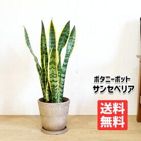 サンスベリア 送料無料 ボタニーポット ベージュ 観葉植物 中型 サンセベリア ローレンティー トラノオ おしゃれ インテリア