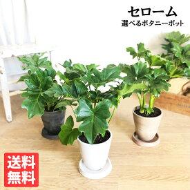 セローム 選べる鉢カラー ボタニーポット フィロデンドロン 新素材 自宅用 ギフト 送料無料 観葉植物 セロウム