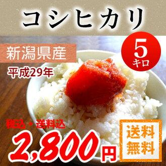 H28年产新潟县生产越光<新潟上越地区指定>白米5kg北海道、冲绳、一部分孤岛(JA米)(一等米)之外的