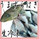 ウマヅラハギ 500g前後3〜8尾 冷凍 ■ 鮮魚セット カワハギ うまづらはぎ ペットフード 猫
