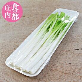 【山菜】【うるい】 100g 山形県庄内産 産地直送 オオバギボウシ 野菜 庄内野菜