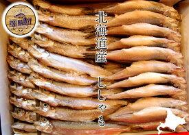 北海道産 本ししゃも 大サイズ メス1箱(30尾入)   ☆身はふっくら脂はジューシー!(北海道 ししゃも 柳葉魚)