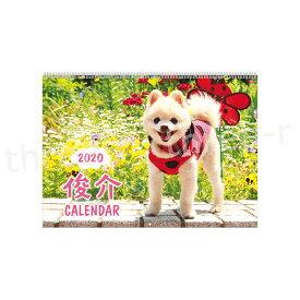 AP-034 俊介 カレンダー 2020年 壁掛け 〈 いぬ どうぶつ アニマル 犬 アートプリントジャパン 1000109243 〉