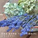 ラベンダー ドライフラワー北海道 富良野産濃紫 100g