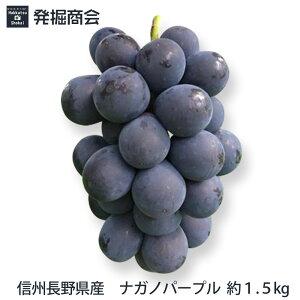 信州 長野県産【ナガノパープル】約1.5kg〜(3房)種なしぶどう【送料無料】