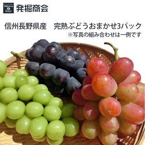 信州 長野県産 完熟 ぶどう【おまかせ3パック】ぶどう3種類のセット数量限定 種なしぶどう