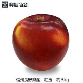 信州 長野県産 紅玉 約5kg2019年度収穫 りんご 【送料無料】