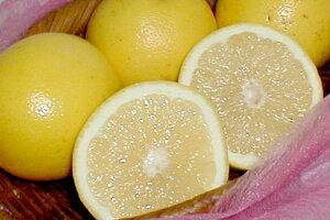 南アフリカ産 グレープフルーツ(白肉)24個入り爽やか風味が夏に旨い♪ 南国の味 トロピカルフルーツ