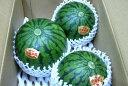 鳥取産 「大栄」小玉スイカ (秋)3Lサイズ3個入りすいかの本場「だいえい」町の鮮やかな緑の外観、赤く甘い果肉の「だいえい」小玉西瓜です♪02P01Oct16