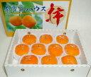 奈良産 ハウス柿(かき) 10個入り化粧箱○ご贈答おすすめ果物です特有の風味を持つ甘い柿です。種無しカキ02P29Aug16