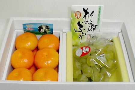 【送料無料!】岡山産 桃太郎ぶどう(瀬戸ジャイアンツぶどう)・ハウスミカン セット 化粧箱○ご贈答おすすめ果物です