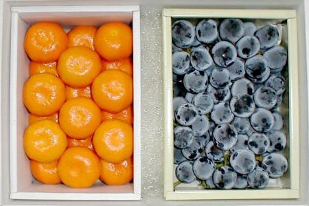 【送料無料!】巨峰(きょほう)ぶどう・ハウスミカン 化粧箱●ご贈答おすすめ果物です大粒で甘いブドウと、薄い皮に甘い果汁のハウスみかんのフルーツギフトセット♪夏限定