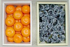 果物セット【送料無料】種あり巨峰(きょほう)ぶどう1kg・ハウスミカン 1kgセット化粧箱●ご贈答おすすめ果物です【ラッキーシール対応】