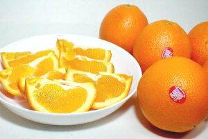 アメリカ カリフォルニア産 ネーブルオレンジ大玉 24個入り (約270g/1個) 柑橘