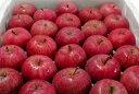 いかりりんご「超新鮮!ふじ」青森産 5kg(18〜25個入り)〔店長おすすめ果物です〕シャッキリして甘い!新鮮さがうれしいリンゴです。春から夏でも高い品質が自慢...