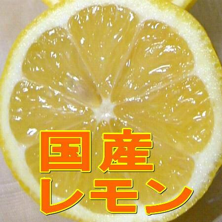 【お試し 送料無料】(レモン れもん 檸檬)国産 レモン Mサイズ 約2kg(16個前後入り)防カビ剤を使わないなど安心の国産レモンです。冬はやや緑色が残るものも入りますノーワックス