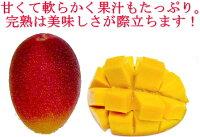 みやざき完熟マンゴー