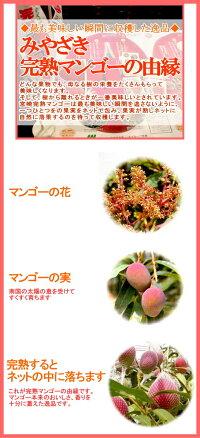 宮崎産高級完熟マンゴー3Lサイズ1玉○店長おすすめ果物です初夏のフルーツ甘いトロピカルフルーツの女王です☆アーウィン種