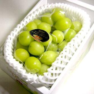 冈山照亮马斯喀特葡萄的 '伟大的国王' 700 g 礼品盒 ○ 是送礼马斯喀特薄薄的皮肤没有光泽的特色的水果和种子吃,容易吃果肉的葡萄是甜的密集葡萄马斯喀特闪耀礼物 gift02P05Nov16