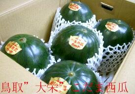 鳥取産「大栄」小玉スイカ(秋)Lサイズ 5個入り 小玉西瓜 こだますいか