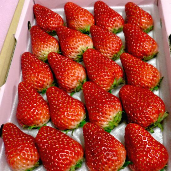 紅ほっぺ (べにほっぺ)イチゴ 大玉 2L 20個入り化粧箱 愛媛産大粒 コクある風味の苺です希少品のためお届け日のご指定はいただけません。不都合日をお知らせいただけましたら幸いです「ストロベリー 苺 ギフト箱」