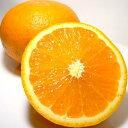 和歌山産 「有田」清見オレンジ5kg Lサイズ(27個前後入り)暖かい黒潮と太陽が育てた「清見(きよみ)」は、ほとば…