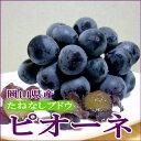 岡山産 「種無し」ピオーネぶどう2kg (4〜5房)種がなく、甘くて美味な黒い葡萄です