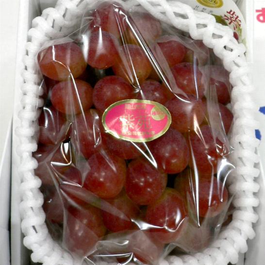 「種無し」 紫苑ぶどう(しえんぶどう) 700g 化粧箱 岡山産 ギフトぶどう グレープ ブドウ 葡萄