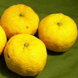 柚子(ユズ) 大玉 8〜9個前後入り 高知産お鍋、和食の美味しさを引き立てる柑橘のゆずです