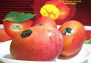 台湾産 マンゴー 大玉 12〜14個入り香り高くとっても美味な台湾のマンゴーです♪ 甘いトロピカルフルーツ 【たいわん アップルマンゴー】