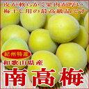和歌山産 うめ「南高梅(なんこうばい)」2L 2.5kg(90個前後入り)梅干用として最高の品質を誇ります♪ 生梅【紀州みやげ 南部(みなべ)うめぼし 生ウメ】