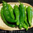 万願寺とうがらし(まんがんじとうがらし) 約1kg(32〜40本前後) 京都産 「京野菜」 「京の伝統野菜」 甘長 トウ…