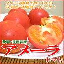 静岡・長野産 アメーラトマト 1kgフルーツ感覚でサラダに添えても美味しく味わえる「高糖度とまと」です! 小粒トマト フルーツトマト 「ミニトマト プチトマト ...