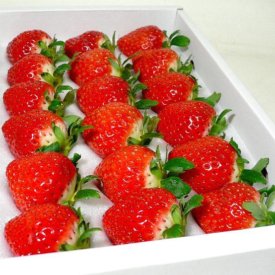さぬきひめ イチゴ 15個入り 化粧箱 香川産○ご贈答おすすめ果物です柔らか食感 香り豊なジューシーいちご※お届け日はご指定いただけません。「ストロベリー 苺 ギフトボックス さぬき姫」