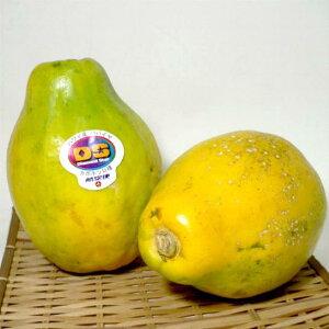 パパイア 9〜10個前後入り 5kg (ソロ種)アメリカ産独特の香りと甘さの南国の果物 肉を軟らかくする効果があります「蕃瓜 木瓜 万寿果」