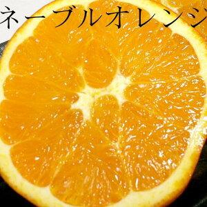 ネーブルオレンジ 16個入り 約3kg甘くてすっきり♪朝の始まりはスイートオレンジで!【88サイズ】